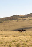 Herd of horses grazing in the steppe. Stock Photo