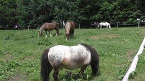 Herd of horses in green pasture stock video