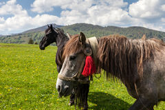 Herd of horses on green pastures Stock Photo