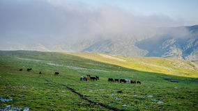 Herd Of Horses high In The Mountains Royalty Free Stock Images