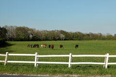 Herd of Horses at a Horse Farm Stock Images