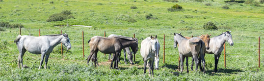 Herd of horses in a meadow Stock Photo