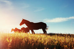 The herd of horses in the mountains Royalty Free Stock Photo