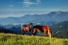 The herd of horses in the mountains Stock Image