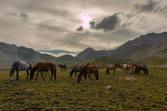 Herd of horses in the mountains Royalty Free Stock Photo