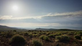The herd of horses in the mountains. Horses grazing in the meadow against the blue sky stock photos