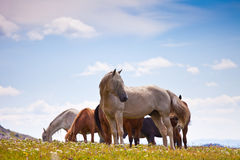 Horse with foal eating grass Stock Photography