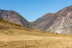 Herd of horses in a mountains Stock Image