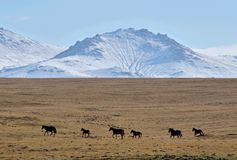 Herd of horses near Son-Kul mountain lake,central Tien Shan, Kyrgyzstan, Central Asia, popular trekking and horse riding place royalty free stock photos