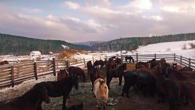 Herd of horses in the paddock in winter. Aerial stock video footage