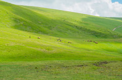 Herd of horses in the pasture Stock Images
