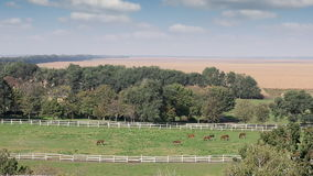 Herd of horses on pasture stock footage