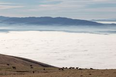 An herd of horses pasturing on top of a mountain, above a sea of. Fog, with some distant and misty hills on the background stock images