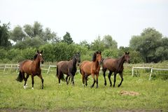 Herd of horses running free at pasture Stock Images