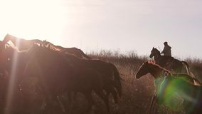 Herd of horses stock video footage