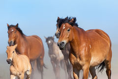 Herd of horses runs on blue sky Stock Images