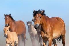 Herd of horses runs on blue sky Stock Images