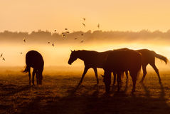 Herd of horses at sunrise over which flies a flock of bird Royalty Free Stock Photo