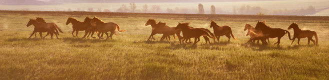 A herd of horses at sunrise. Stock Photos