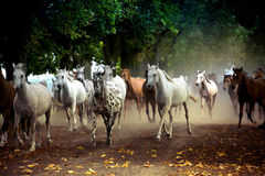 Herd of horses on the village road. In summer Royalty Free Stock Photos