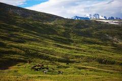 Herd. This is image of herd stock image