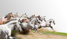 Herd isolated. On a grey to white Stock Photo