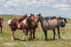 Beautiful Wild Horses in Summer royalty free stock photo