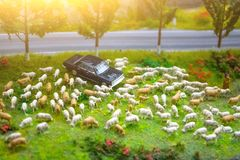 Herd of minimal sheep on a meadow by the road with a parked car. Herd of minimal sheep on a meadow by the road with a parked car royalty free stock photography