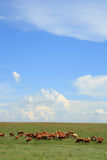 Herd Of Hamburgers Stock Photos