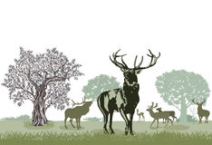 Herd of red deer Stock Images