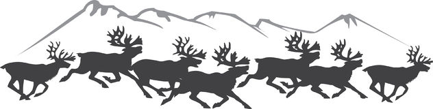 Herd of reindeers Royalty Free Stock Images