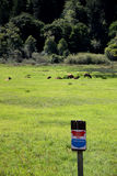 Herd of roosevelt elk cows with no trespass sign. Herd of roosevelt elk cows in a meadow feeding with a no trespass sign royalty free stock image