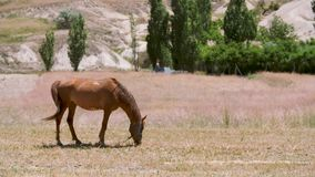 Horses in the Field. Herd of the running horses in the flower field. Red horse with long mane feeding in green meadow stock video footage