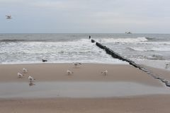 A herd of seagulls on the sand beach of Baltic Sea in north of Poland in winter Royalty Free Stock Photos