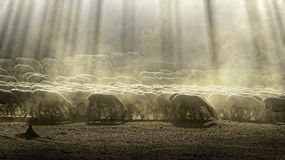 Herd sheep. In the forest.Pastel colors Royalty Free Stock Image