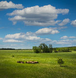 Herd of sheep on beautiful mountain meadow Royalty Free Stock Image