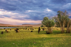 A herd of sheep and goats grazing near the lake at the foot of t Royalty Free Stock Photo