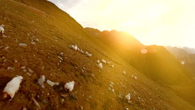 Herd of sheep grazing on mountain grass field aerial view of nature landscape stock footage