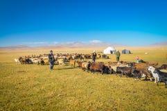 Herd of sheep in Kyrgyzstan Royalty Free Stock Photo