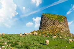 Herd of sheep by a nuraghe in Sardinia. Italy stock photo