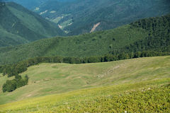 Herd of sheep on pasture in beautiful spring Ukrainian mountains Royalty Free Stock Photography