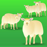 Herd of sheep on a pasture. Vector illustration EPS10 Royalty Free Stock Image
