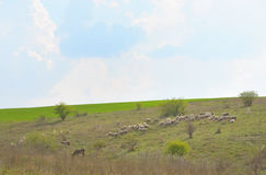 Herd of ships. In spring time Royalty Free Stock Photos