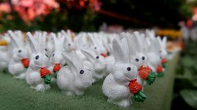 Herd of small white rabbit minuatures Stock Photos