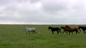 Herd and steppe. Evening stock video