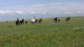 Herd and steppe Royalty Free Stock Photography