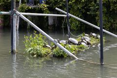 Herd of turtle resting on pile at japan moat. Herd of turtle resting on pile at japanese moat stock photos