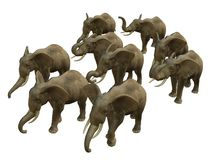Herd of walking elphants. 3D rendered isolated herd of walking elephant Royalty Free Stock Photography