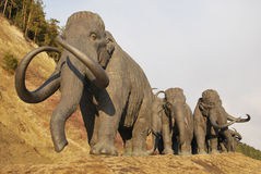 Herd of walking mammoths Stock Photo
