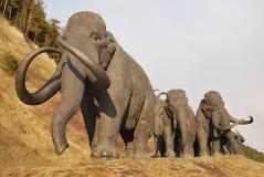 Herd of walking mammoths Stock Photo